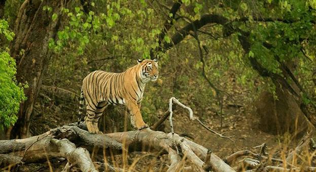 Photo Courtesy - Archna Singh