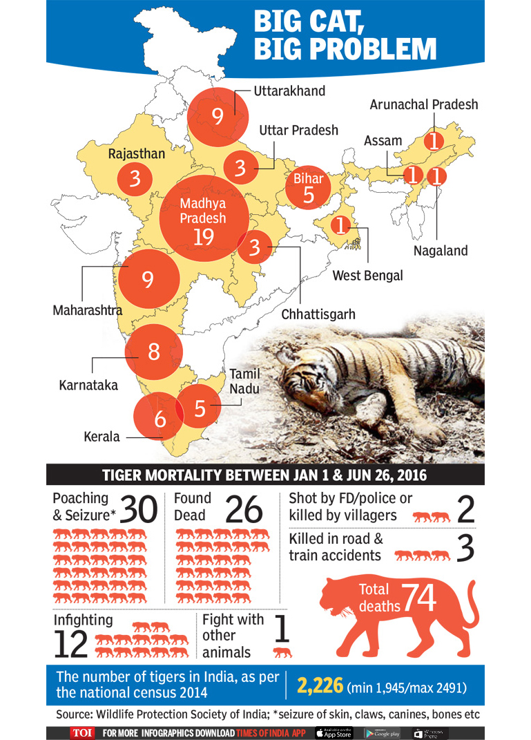 Tiger Death in- Idia Infographic