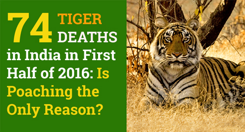 Tigers Poaching in India