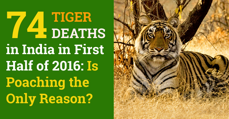 Tiger Deaths in India