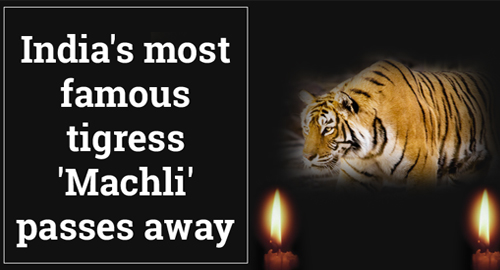 Machli Passes Away