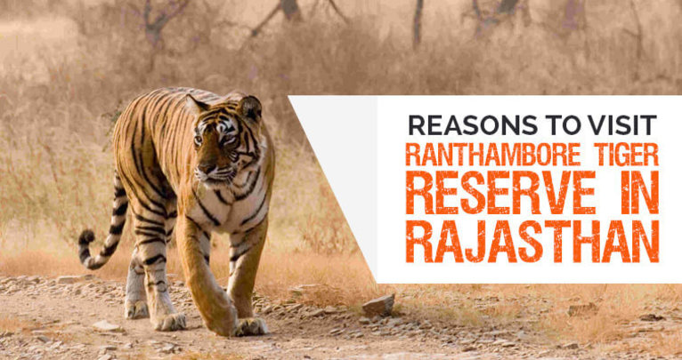 Reasons to Visit Ranthambore Tiger Reserve