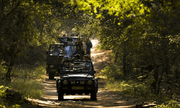 Safari in Ranthambore