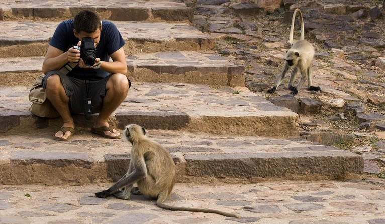 capturing monkeys photos ranthambore
