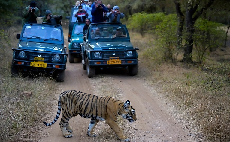 wildlife photography in ranthambore