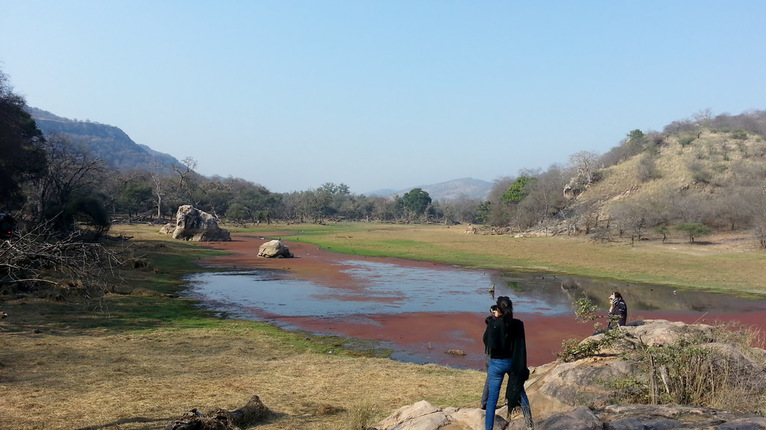 photographing the ranthambore