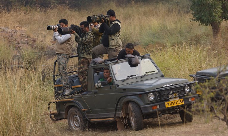 wildlife photography in ranthambore park