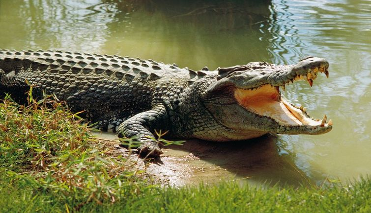 Crocodile Conservation Project