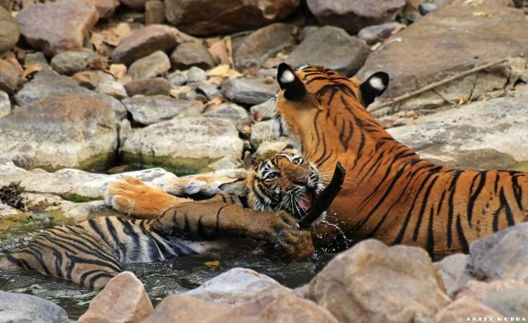 Cubs of Noor