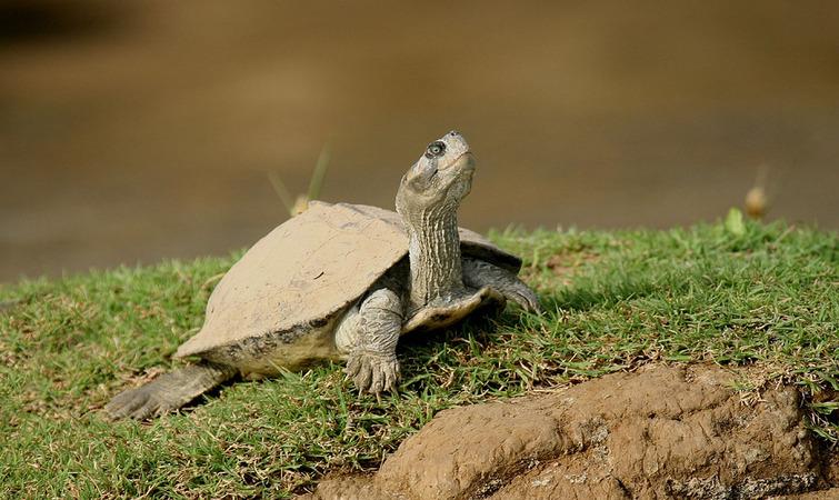 UNDP Sea Turtle Project