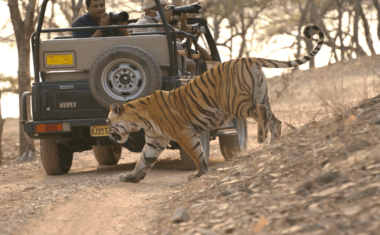 Forest Safari in Ranthambore