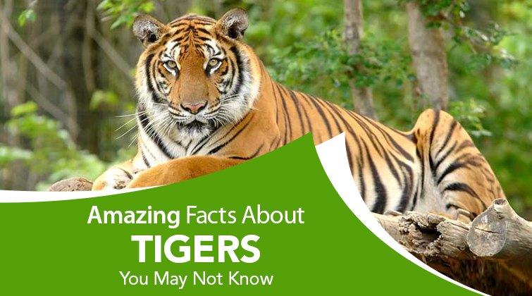 Astonishing Facts About Tigers
