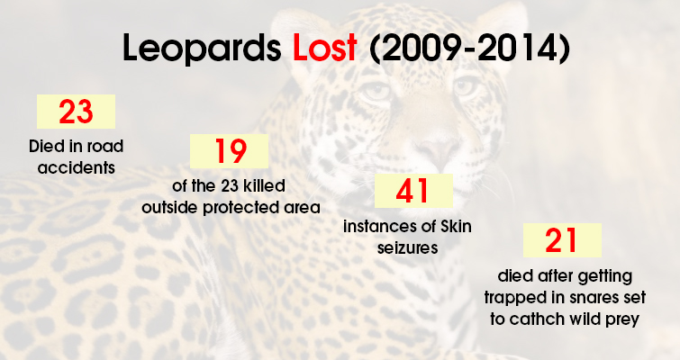 Leopards Lost in between 2009 2014