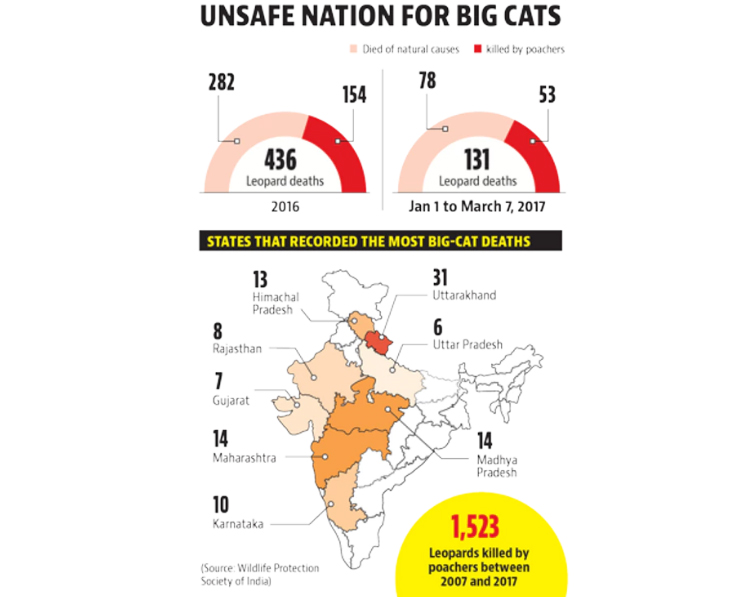 Nation Unsafe for Big Cats