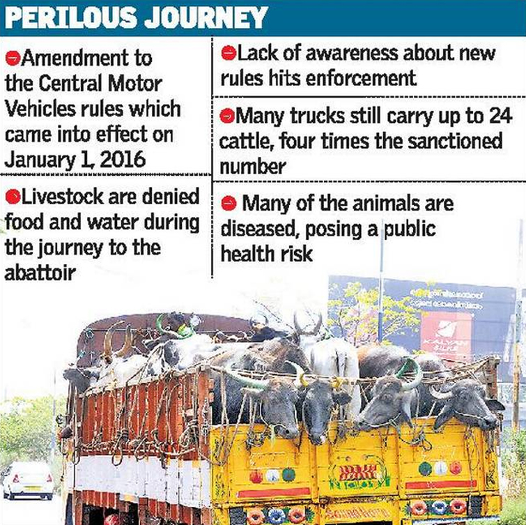 Ongoing animals injured and death cases during livestock transport accidents in India