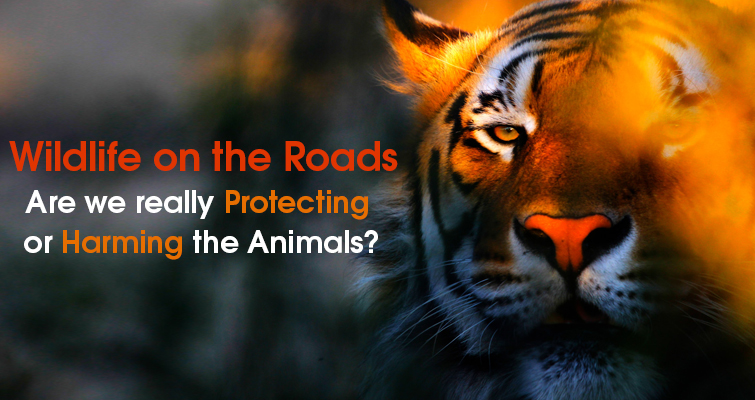 Wildlife on the Roads Are we really harming or protecting them