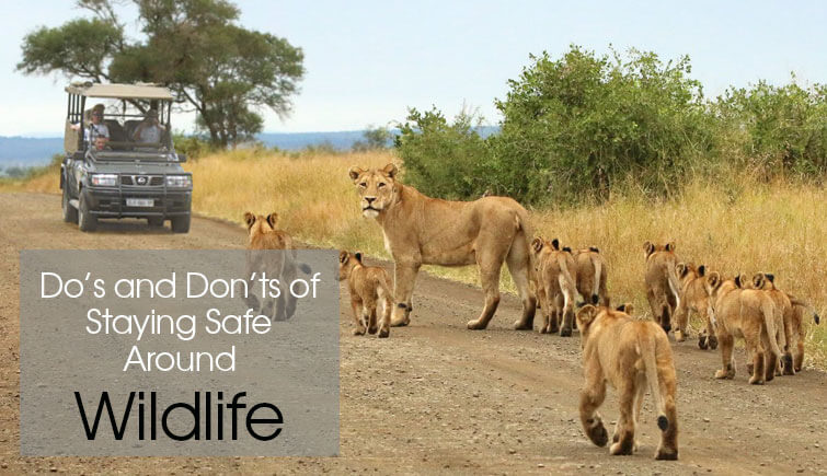 Wildlife Safari Tips