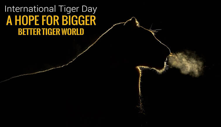 About Global Tiger Day