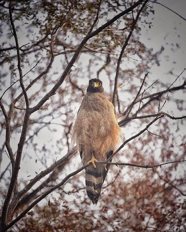 Birding in Ranthambore