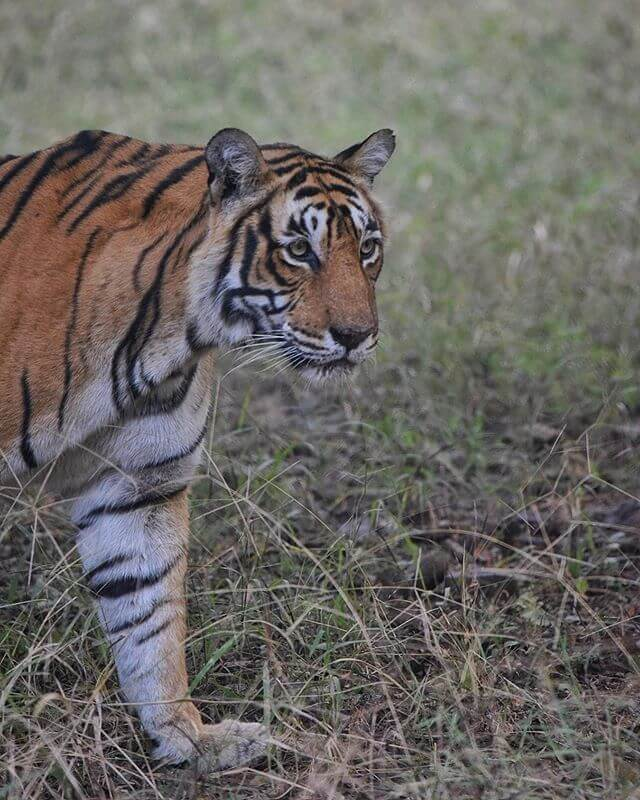 Tiger Sighting at Ranthambore