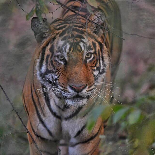 Tiger seeing at Ranthambore