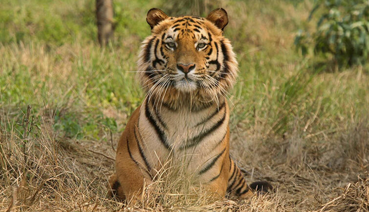 mini-forest-tiger-reserve-ranthambore
