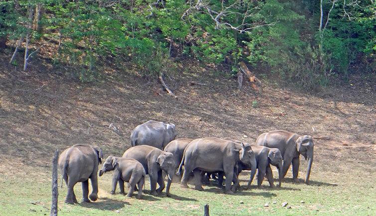 Periyar-National-Park,-Kerala